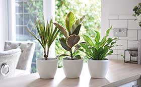 All House Plants