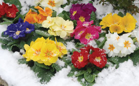 Winter Bedding