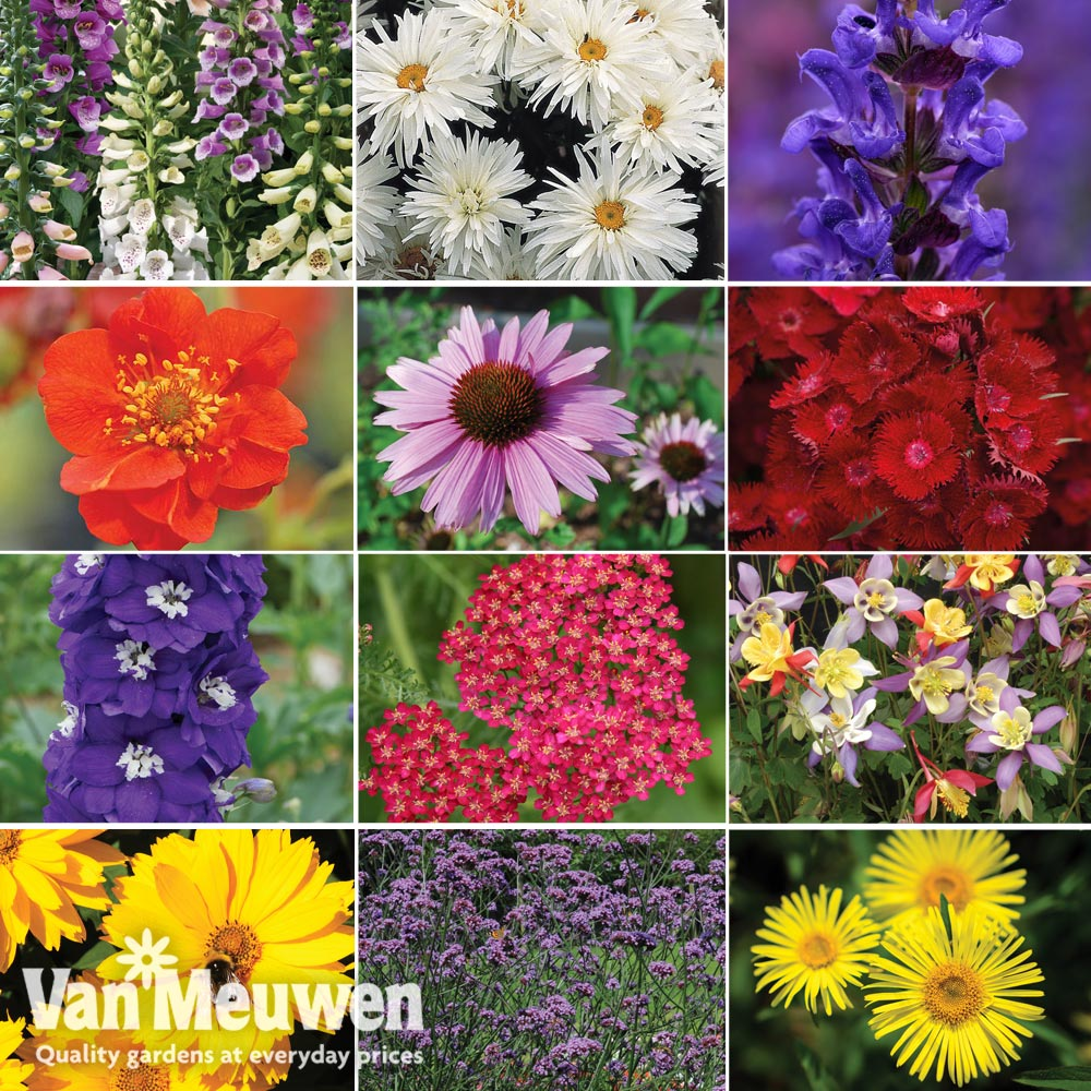 Image of Best Value Perennial Collection