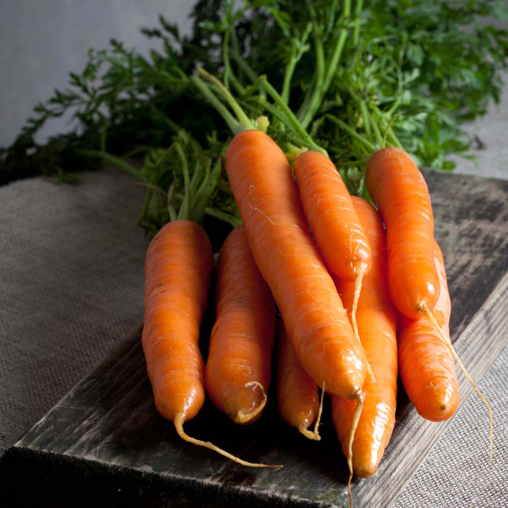 Carrot 'Nantes 2 Frubund' (Fast Crop) (Seeds)
