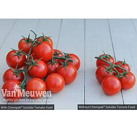chempakreg soluble tomato food