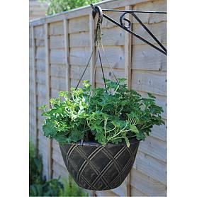 Hanging Basket Plants For Sale In The Uk Van Meuwen