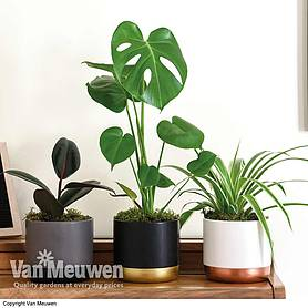 House Plant Urban Jungle Collection (House Plant)