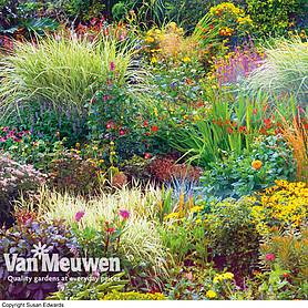seasonal border perennial plants nurserymans choice