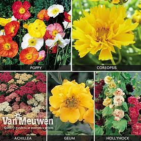 cheap cottage garden plants for sale at van meuwen