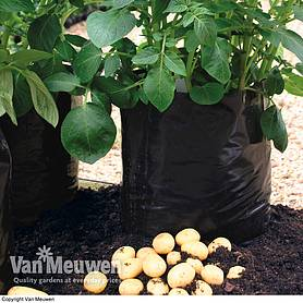 Potato Growing Bag