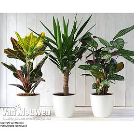 scandi houseplant collection