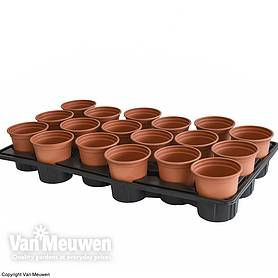 Shuttle Trays and Pots