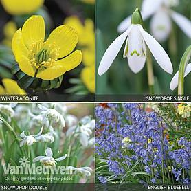 Cheap woodland flower bulbs for sale online buy woodland bulbs cheap woodland flower bulbs for sale online buy woodland bulbs van meuwen mightylinksfo