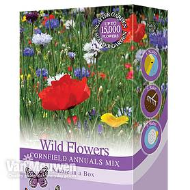 Wildflowers 'Cornfield Annuals Mix'