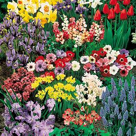 Nuserymans Choice Bulb Collection