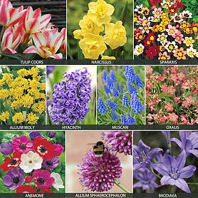 1010 Bumper Bulb Bonanza Collection