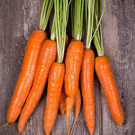 Carrot 'Tendersnax' F1 Hybrid (Seeds)