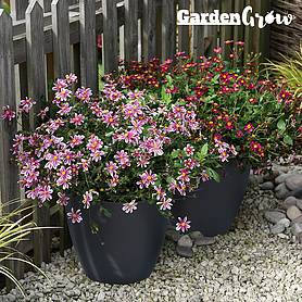 Garden Grow Set of 2 Self Watering Plant Pots -Large