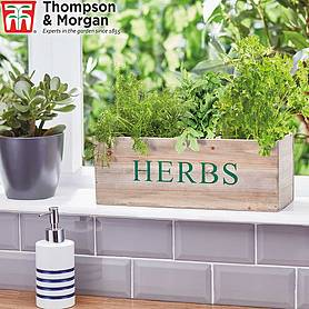 Thompson & Morgan Wooden Herb Gift Set