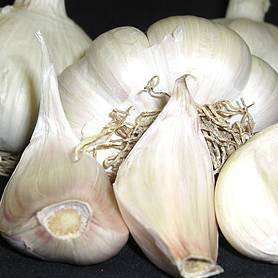 Garlic 'Picardy Wight' (Spring Planting)