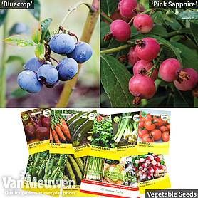 Grow Your Own Blueberry Collection