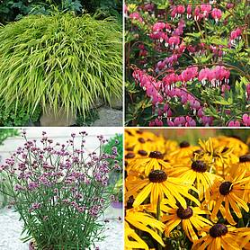 Large Plant Lucky Dip (1 litre)