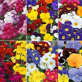 Nurserymans Choice Winter Bedding