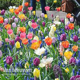 Nuserymans Choice Bulb Mix