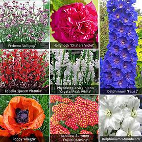 Summer Border Perennial Collection