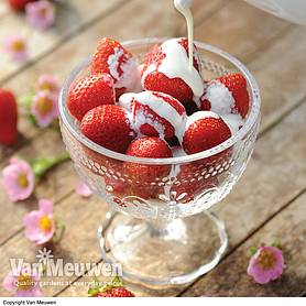 Strawberry 'Just Add Cream™' Basket Collection