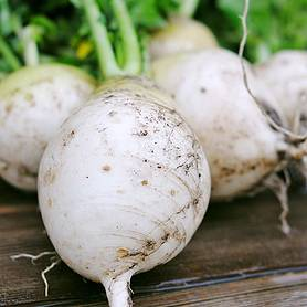 Turnip 'Snowball' (Seeds)