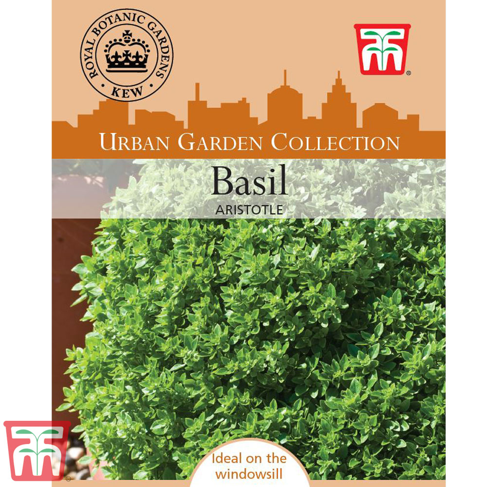 Image of Basil 'Aristotle' - Kew Collection Seeds