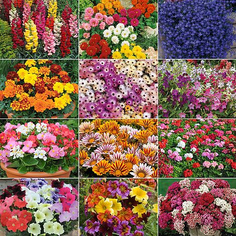 Annual Bedding Plants Collection Van, What Is An Annual Bedding Plant