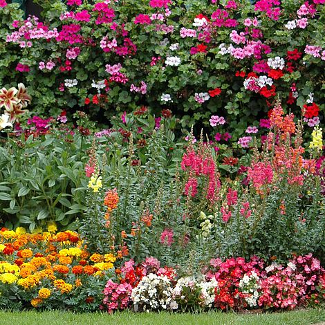 Bumper Annual Bedding Collection Van, What Is An Annual Bedding Plant