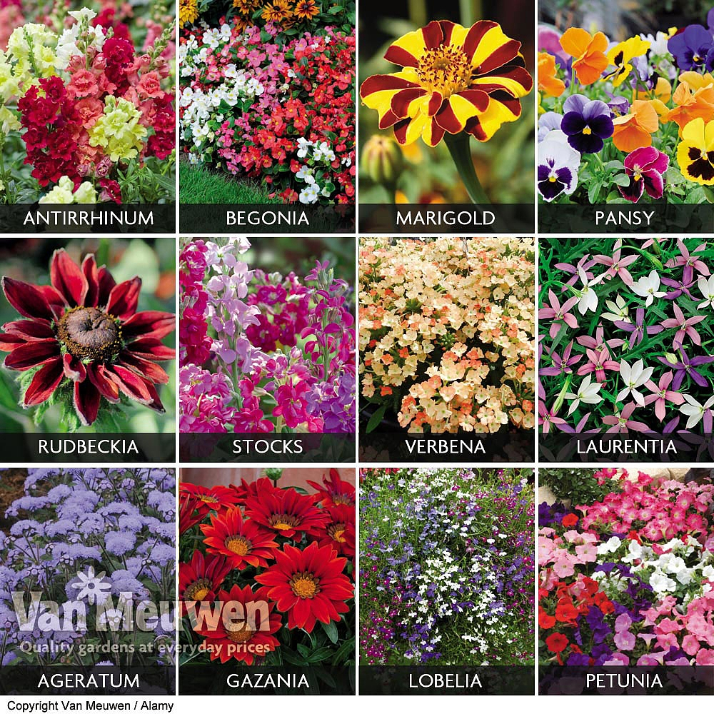 Cheap Online Bedding Plants