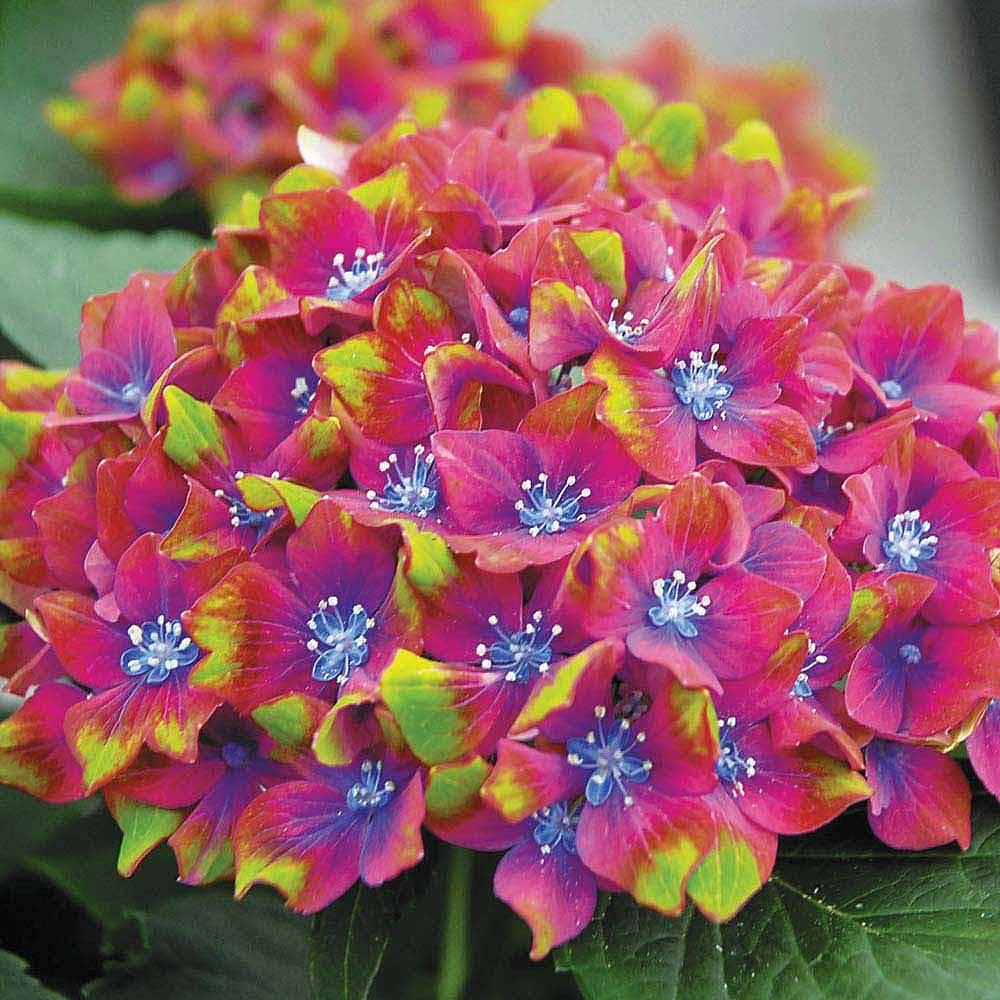 Flower Plants For Cutting Buy Flowers For Cutting Van Meuwen