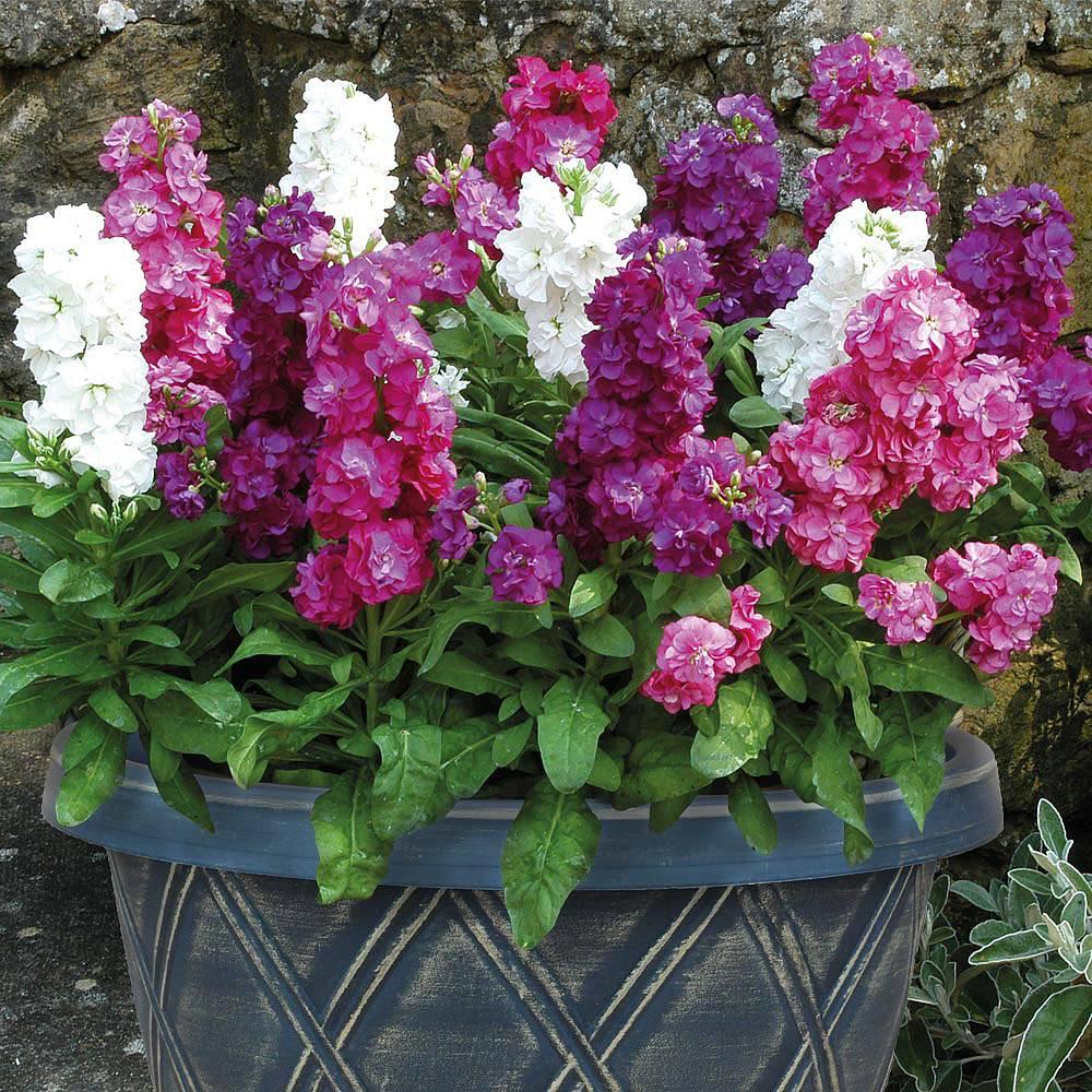 Stocks Vintage Pre Planted Patio Pot Van Meuwen