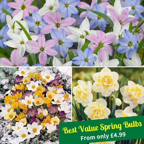 Best Value Spring Bulbs - From only £4.99
