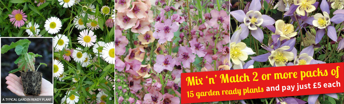 Mix 'n' Match 2 or more packs of 15 garden ready plants and pay just £5 each