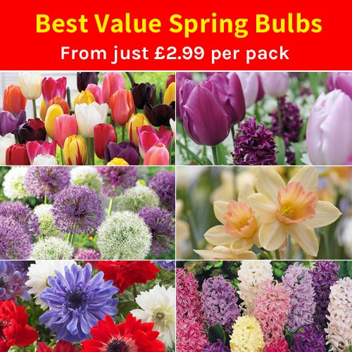 Best Value Spring Bulbs - from just £2.99 per pack