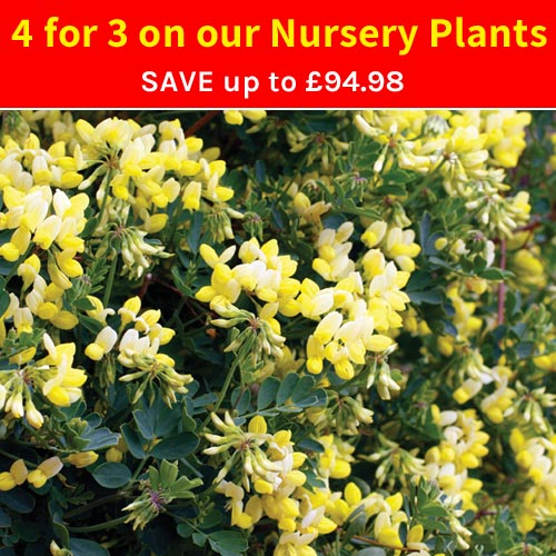 4 for 3 on our Nursery Plant Range