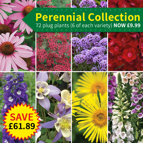 Perennial Collection