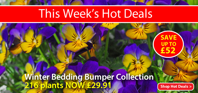 View This Week's Hot Deals