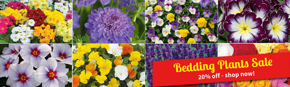 Bedding Plants Sale - 20% OFF