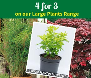 4 for 3 on our Large Plants Range