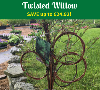 Twisted Willow - SAVE up to £22.91!