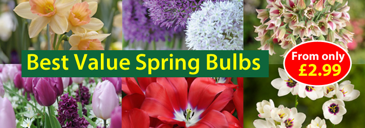 Best Value Spring Bulbs from only £2.99