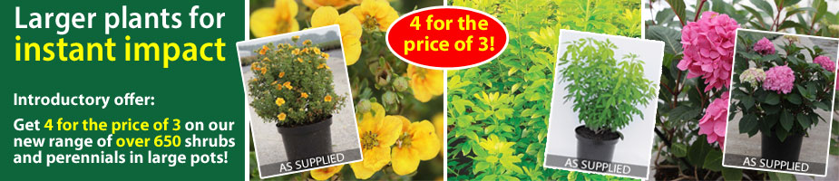 New Large Plants range - 4 for the price of 3