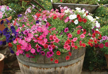 Good Garden Design With Cheap Patio Plants For Sale Online Van Meuwen With  Flowers For Landscaping