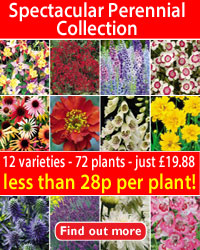 Spectacular Perennials Collection - 72 plants- 12 varieties - just £16.88