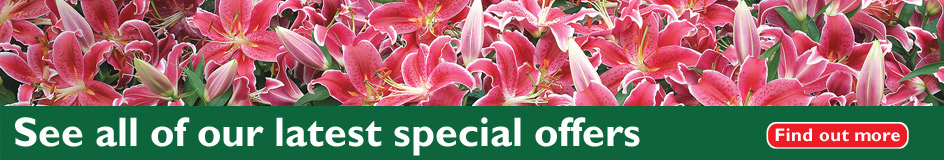 See all of our latest special offers