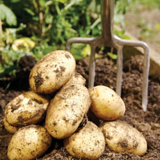 How to plant and grow potatoes