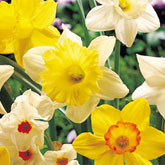 Plant bulbs now for a beautiful spring display