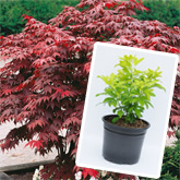 New Large Plant Range - Buy four for the price of three